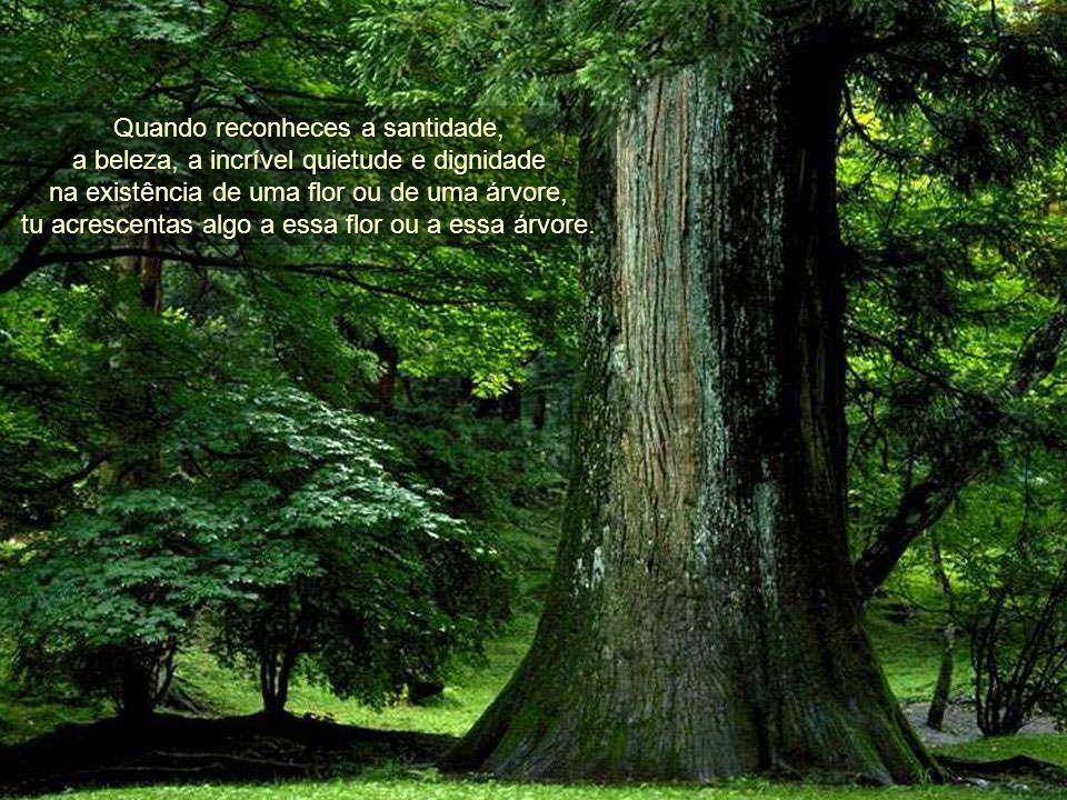Não estás separado da natureza Não estás separado da natureza. Todos somos parte da Vida Única que se manifesta em incontáveis formas em todo o Univer