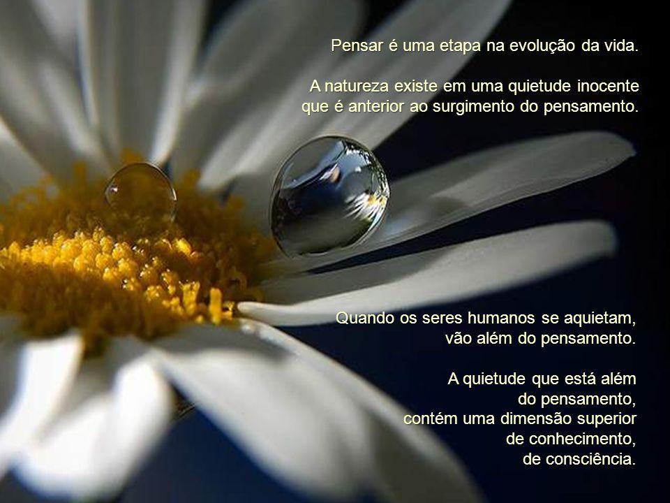 Quando reconheces a santidade, a beleza, a incrível quietude e dignidade na existência de uma flor ou de uma árvore, tu acrescentas algo a essa flor o