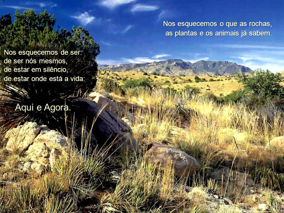 Nos esquecemos o que as rochas, as plantas e os animais já sabem.