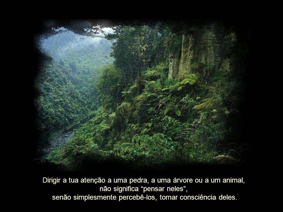 Dirigir a tua atenção a uma pedra, a uma árvore ou a um animal, não significa pensar neles, senão simplesmente percebê-los, tomar consciência deles.