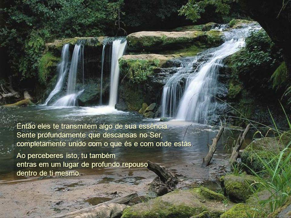 Dirigir a tua atenção a uma pedra, a uma árvore ou a um animal, não significa pensar neles, senão simplesmente percebê-los, tomar consciência deles. s