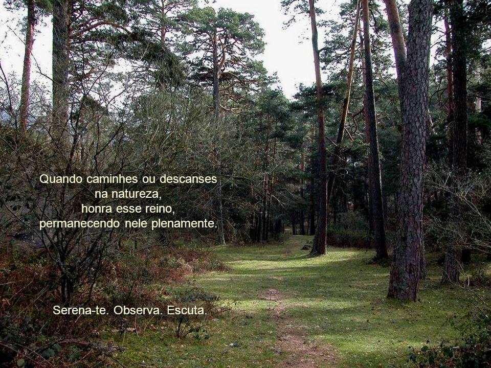 Quando caminhes ou descanses na natureza, honra esse reino, permanecendo nele plenamente.