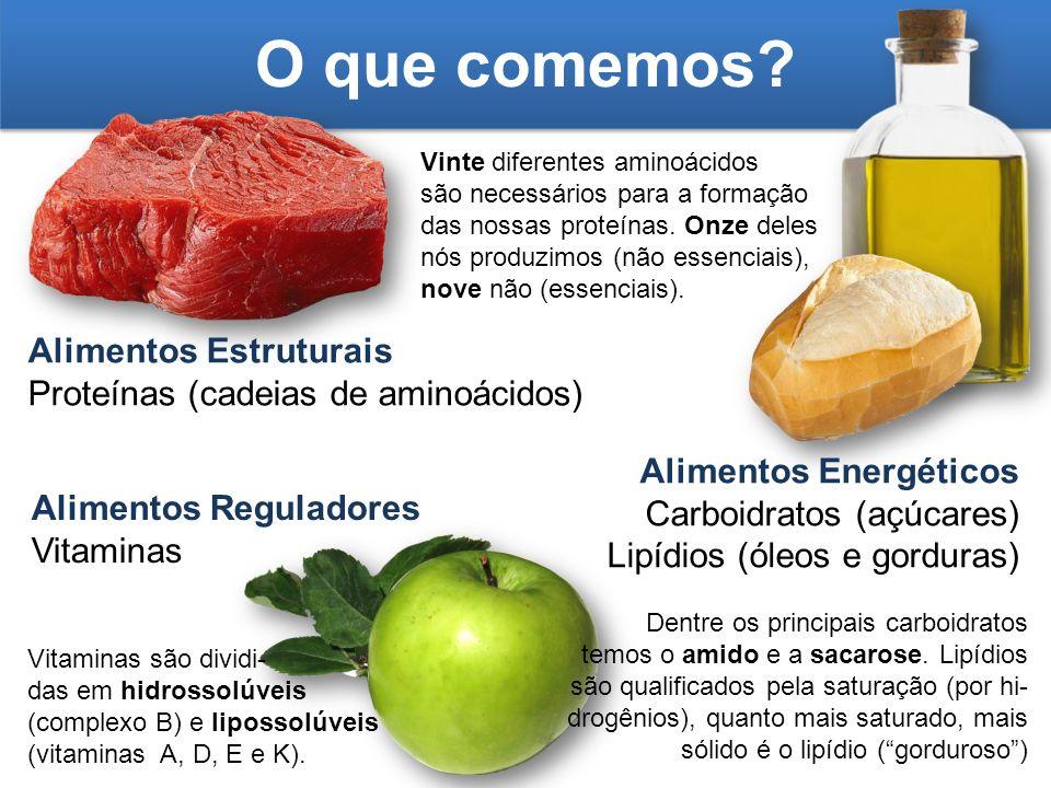 O que comemos? Alimentos Estruturais Proteínas (cadeias de aminoácidos) Alimentos Energéticos Carboidratos (açúcares) Lipídios (óleos e gorduras) Alim