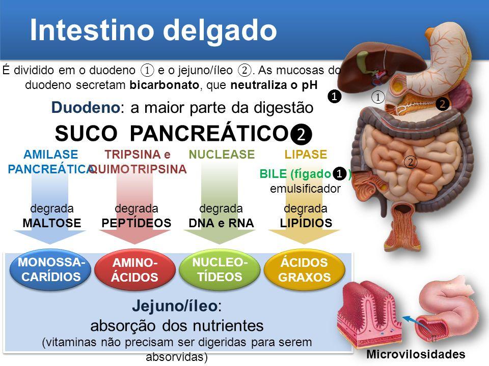 Intestino delgado É dividido em o duodeno e o jejuno/íleo. As mucosas do duodeno secretam bicarbonato, que neutraliza o pH Duodeno: a maior parte da d
