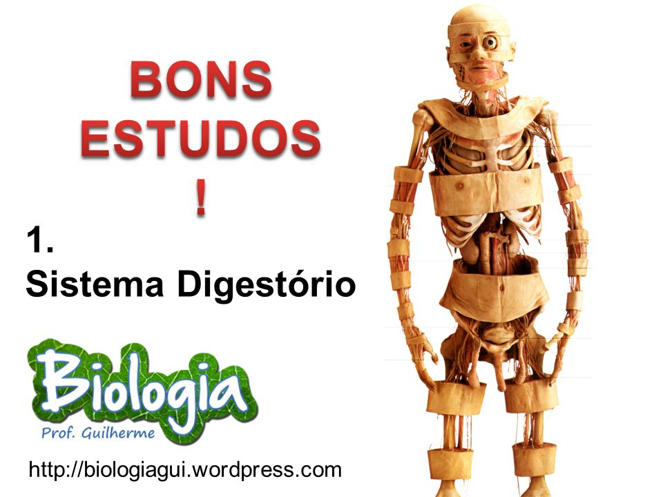 http://biologiagui.wordpress.com 1. Sistema Digestório