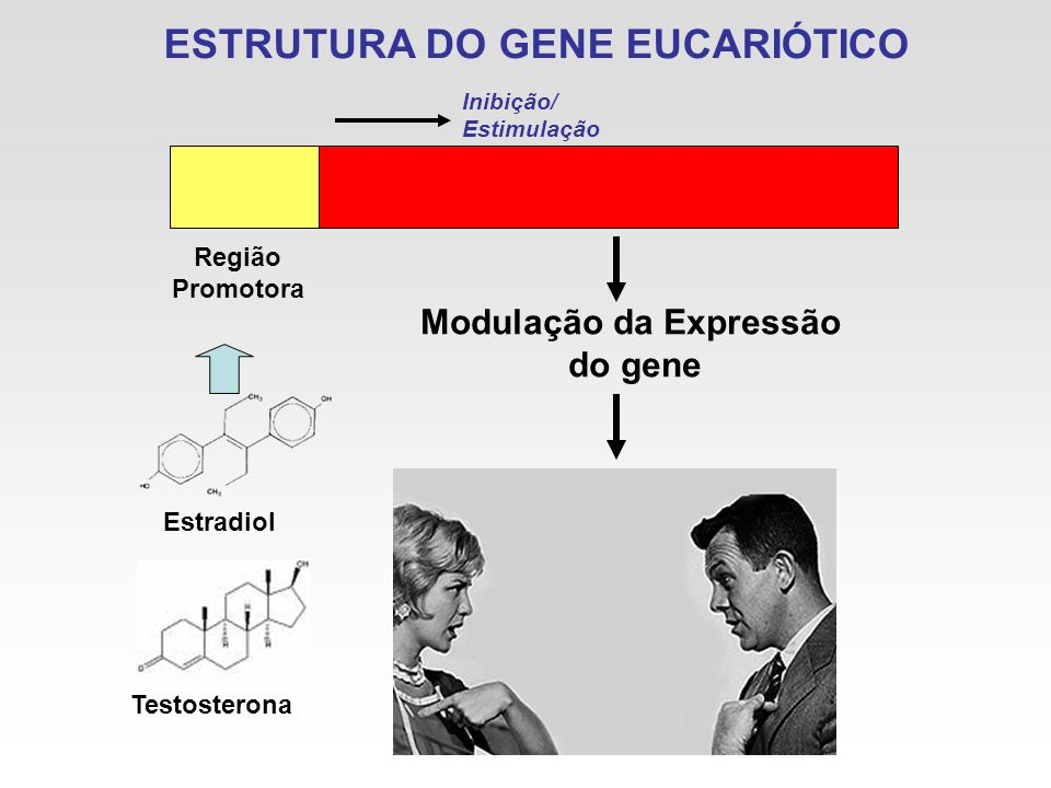 ESTRUTURA DO GENE EUCARIÓTICO Região Promotora Estradiol Modulação da Expressão do gene Testosterona Inibição/ Estimulação