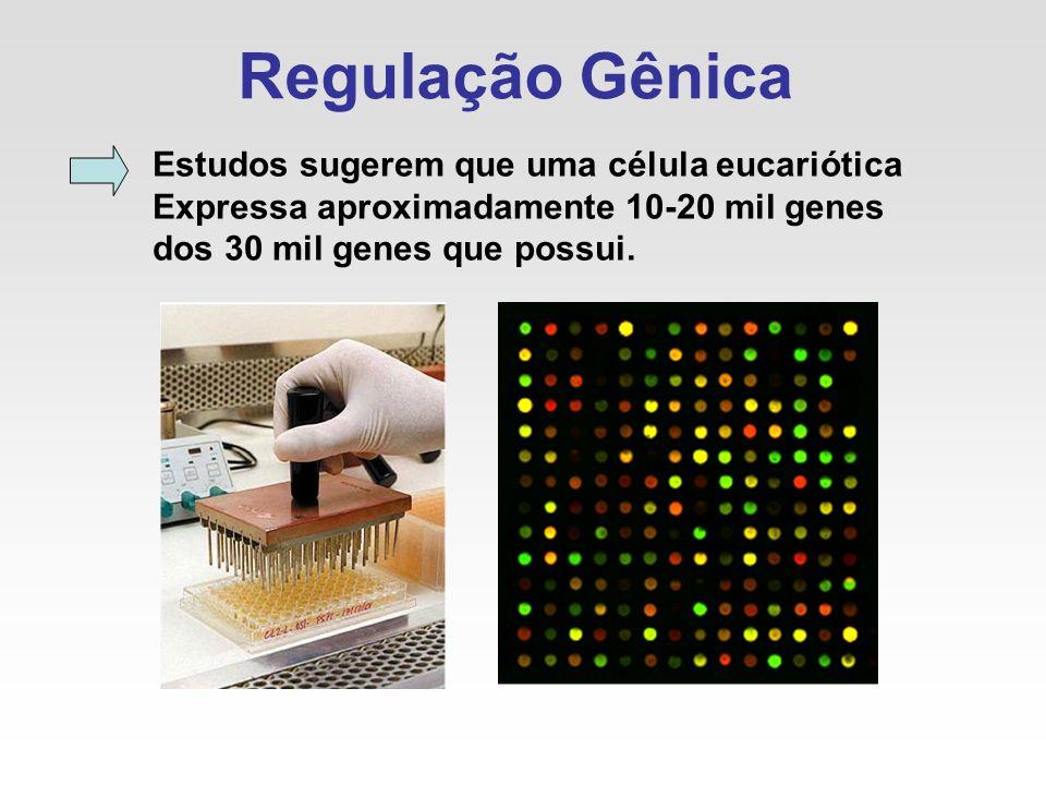 Regulação Gênica Estudos sugerem que uma célula eucariótica Expressa aproximadamente 10-20 mil genes dos 30 mil genes que possui.