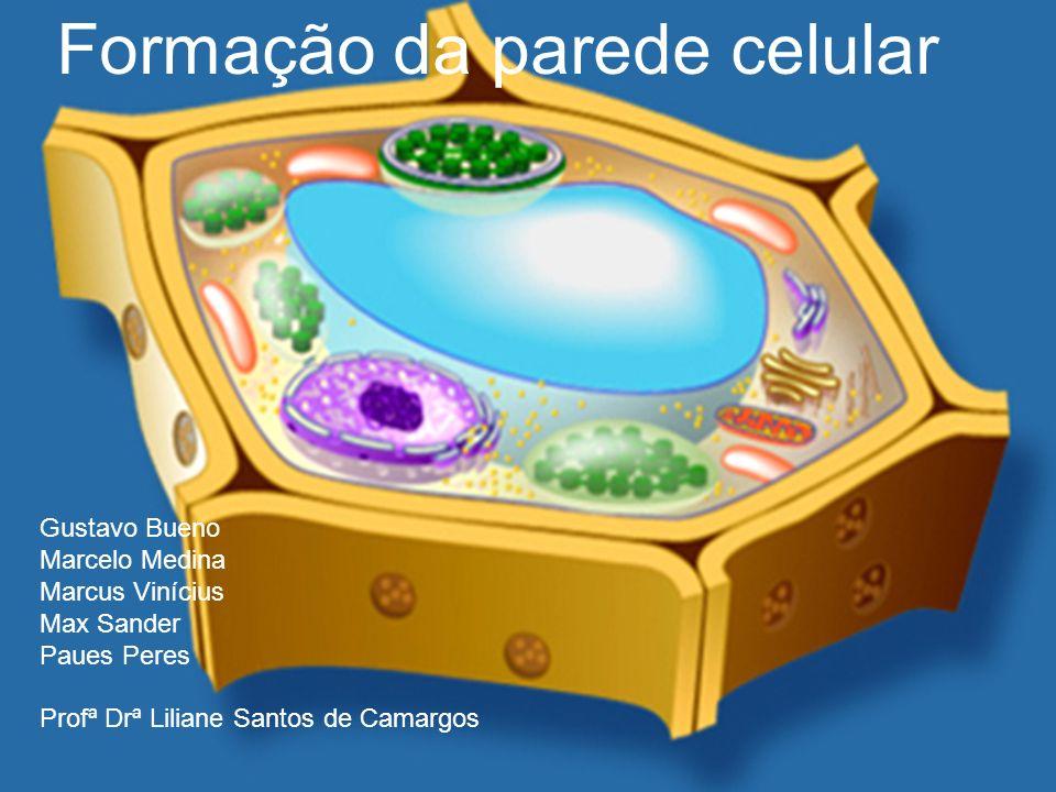 Gustavo Bueno Marcelo Medina Marcus Vinícius Max Sander Paues Peres Profª Drª Liliane Santos de Camargos Formação da parede celular