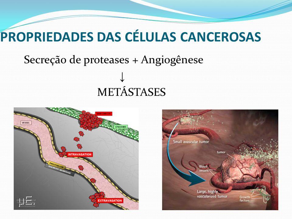 PROPRIEDADES DAS CÉLULAS CANCEROSAS Secreção de proteases + Angiogênese METÁSTASES