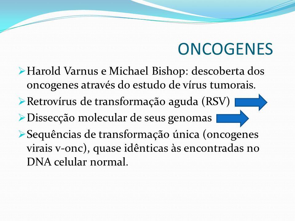 ONCOGENES Harold Varnus e Michael Bishop: descoberta dos oncogenes através do estudo de vírus tumorais. Retrovírus de transformação aguda (RSV) Dissec