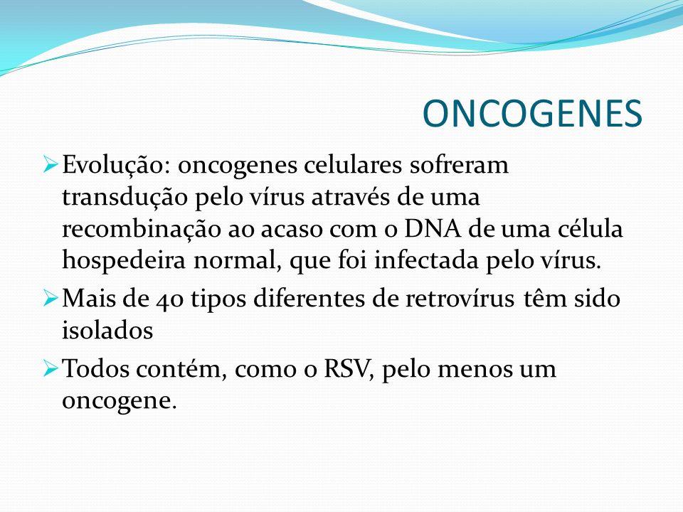 ONCOGENES Evolução: oncogenes celulares sofreram transdução pelo vírus através de uma recombinação ao acaso com o DNA de uma célula hospedeira normal, que foi infectada pelo vírus.