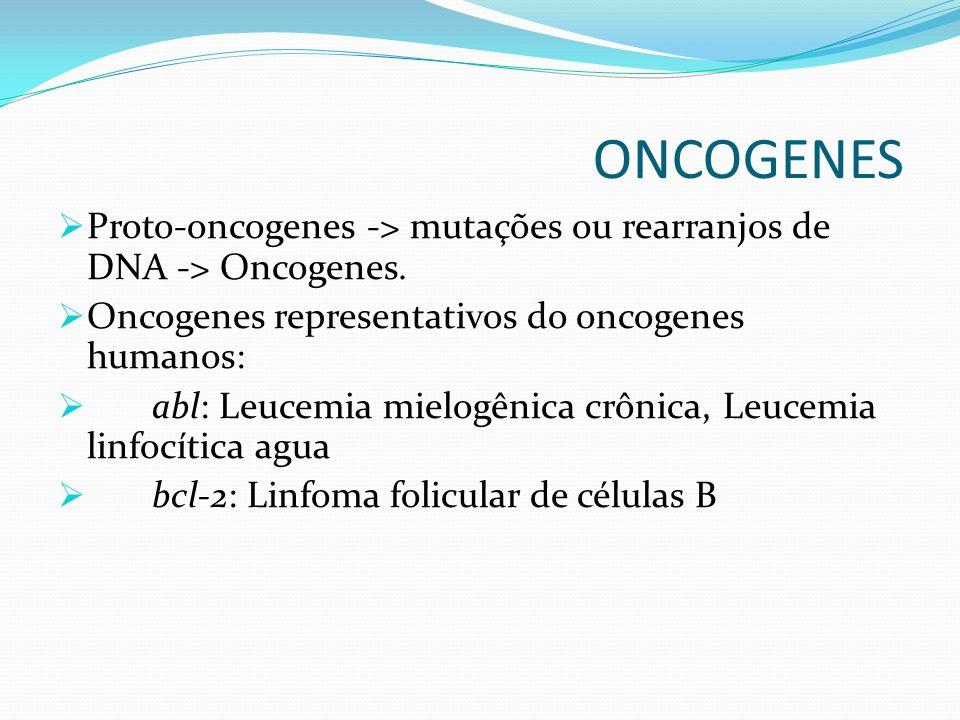 ONCOGENES Proto-oncogenes -> mutações ou rearranjos de DNA -> Oncogenes. Oncogenes representativos do oncogenes humanos: abl: Leucemia mielogênica crô