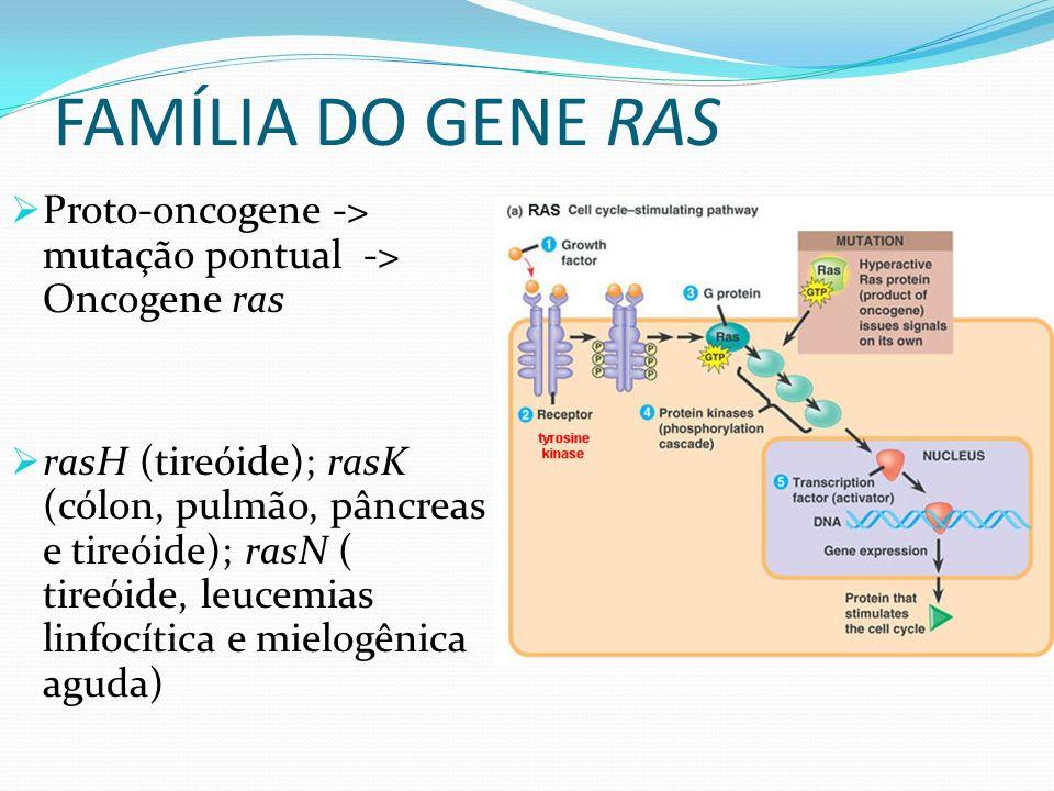 FAMÍLIA DO GENE RAS Proto-oncogene -> mutação pontual -> Oncogene ras rasH (tireóide); rasK (cólon, pulmão, pâncreas e tireóide); rasN ( tireóide, leucemias linfocítica e mielogênica aguda)