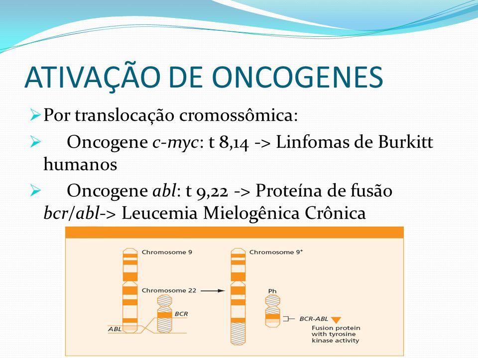 ATIVAÇÃO DE ONCOGENES Por translocação cromossômica: Oncogene c-myc: t 8,14 -> Linfomas de Burkitt humanos Oncogene abl: t 9,22 -> Proteína de fusão b