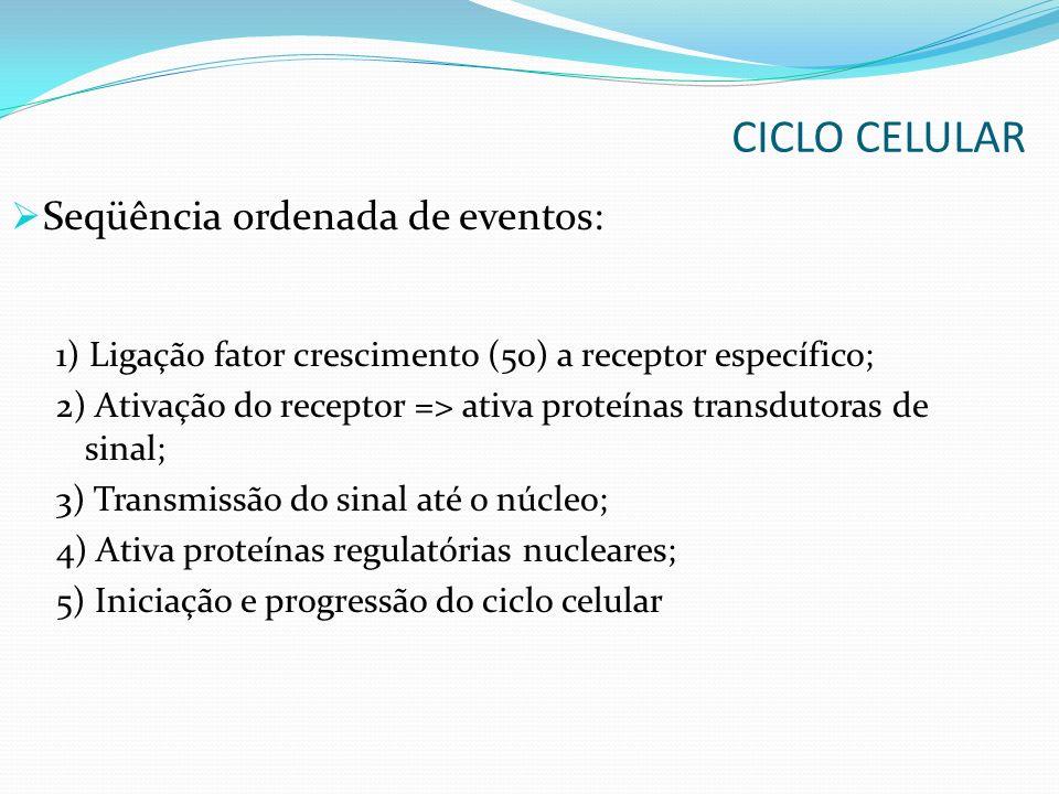 Seqüência ordenada de eventos: 1) Ligação fator crescimento (50) a receptor específico; 2) Ativação do receptor => ativa proteínas transdutoras de sinal; 3) Transmissão do sinal até o núcleo; 4) Ativa proteínas regulatórias nucleares; 5) Iniciação e progressão do ciclo celular CICLO CELULAR
