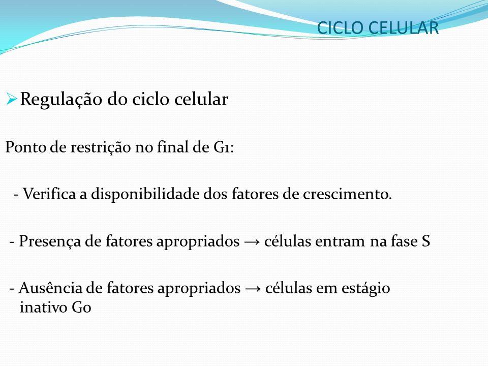 Regulação do ciclo celular Ponto de restrição no final de G1: - Verifica a disponibilidade dos fatores de crescimento. - Presença de fatores apropriad