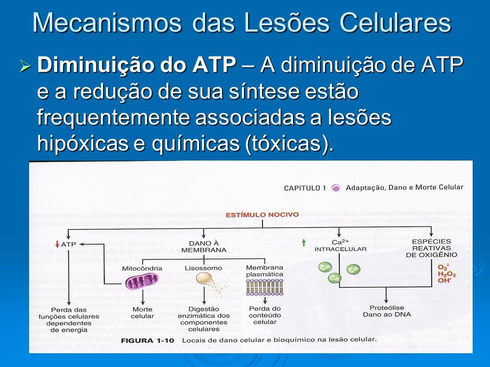 Mecanismos das Lesões Celulares Diminuição do ATP – A diminuição de ATP e a redução de sua síntese estão frequentemente associadas a lesões hipóxicas