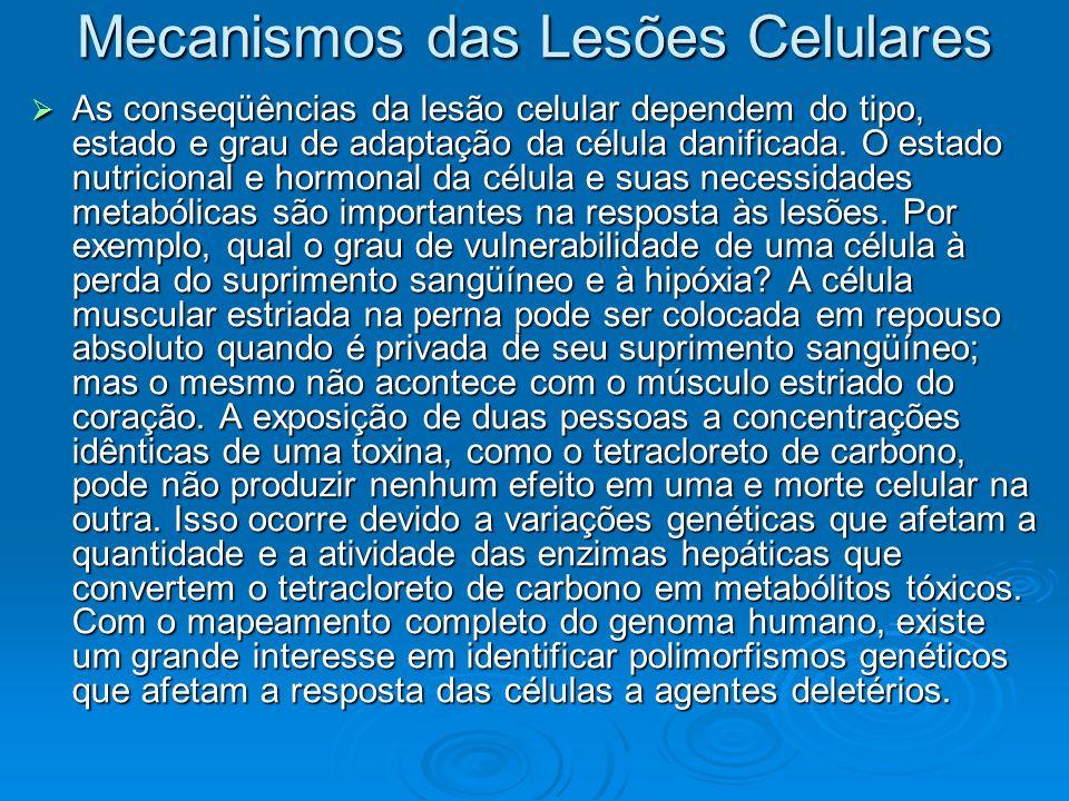 Mecanismos das Lesões Celulares As conseqüências da lesão celular dependem do tipo, estado e grau de adaptação da célula danificada. O estado nutricio