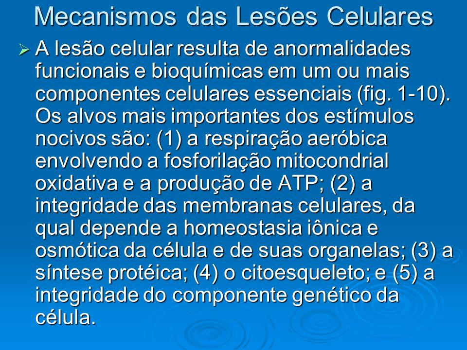 Mecanismos das Lesões Celulares A lesão celular resulta de anormalidades funcionais e bioquímicas em um ou mais componentes celulares essenciais (fig.