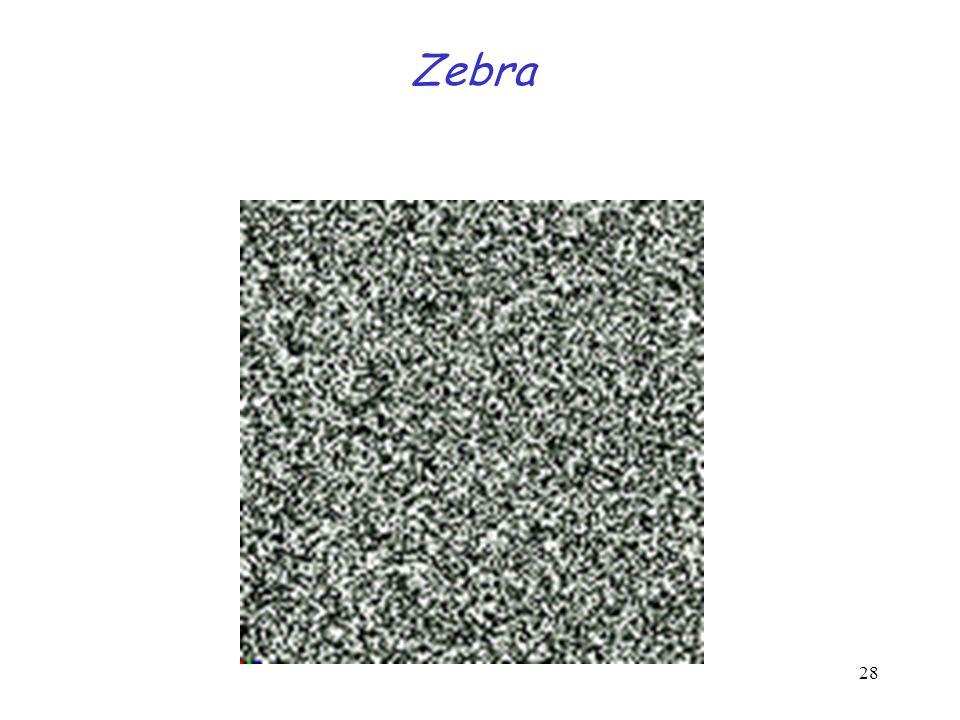 28 Zebra