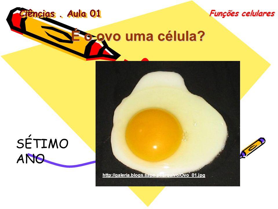 Ciências. Aula 01 Funções celulares É o ovo uma célula? http://galeria.blogs.sapo.pt/arquivo/Ovo_01.jpg SÉTIMO ANO