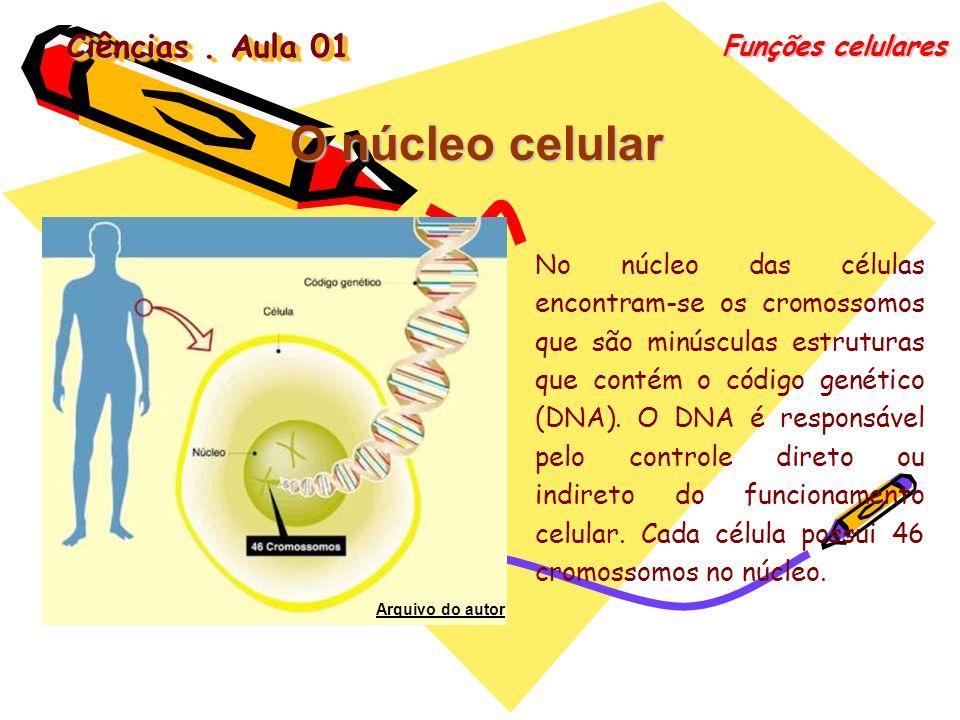 Ciências. Aula 01 Funções celulares O núcleo celular No núcleo das células encontram-se os cromossomos que são minúsculas estruturas que contém o códi