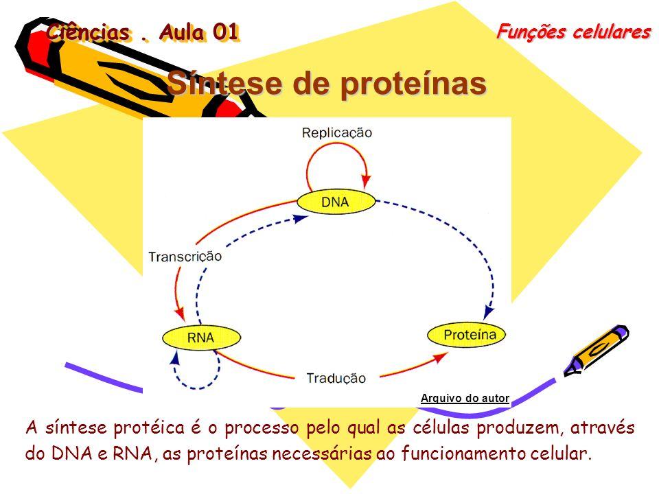 Ciências. Aula 01 Funções celulares Síntese de proteínas A síntese protéica é o processo pelo qual as células produzem, através do DNA e RNA, as prote