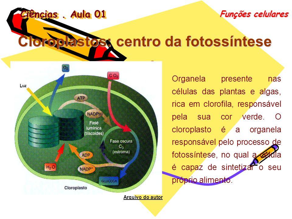 Ciências. Aula 01 Funções celulares Cloroplastos: centro da fotossíntese Organela presente nas células das plantas e algas, rica em clorofila, respons