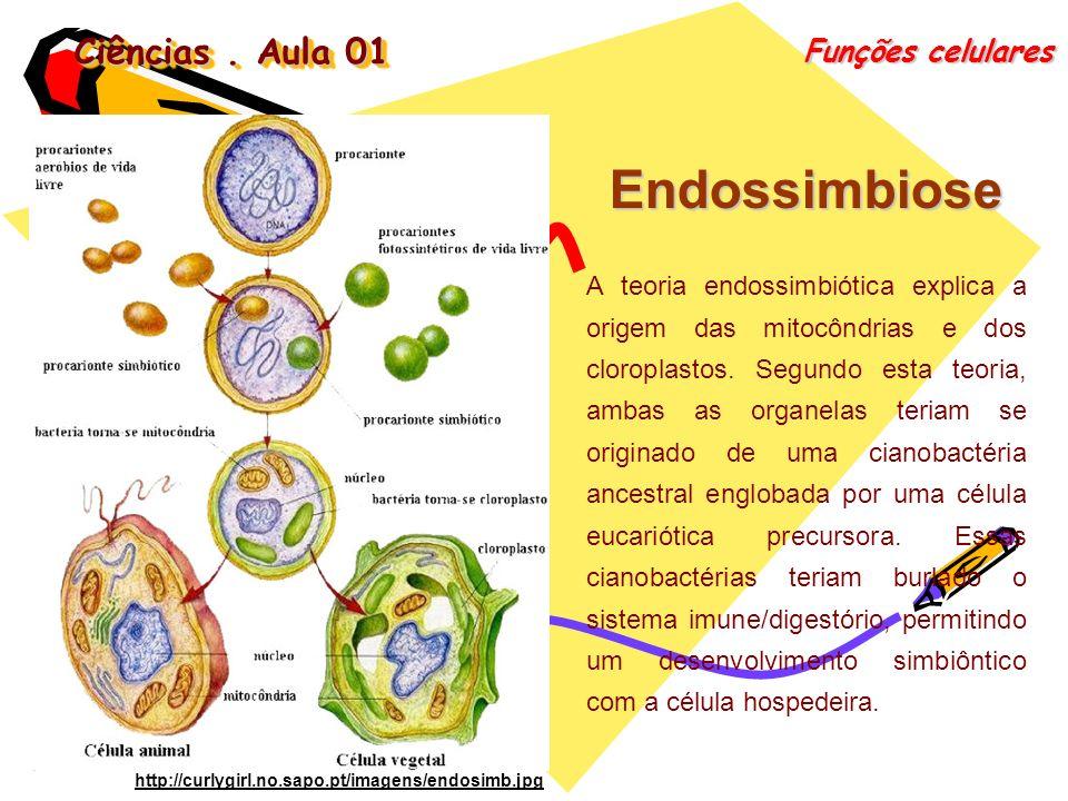 Ciências. Aula 01 Funções celulares Endossimbiose A teoria endossimbiótica explica a origem das mitocôndrias e dos cloroplastos. Segundo esta teoria,