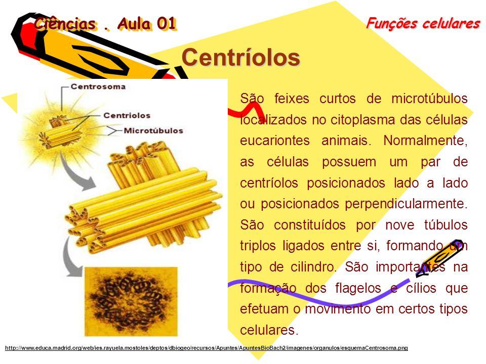 Ciências. Aula 01 Funções celulares Centríolos São feixes curtos de microtúbulos localizados no citoplasma das células eucariontes animais. Normalment