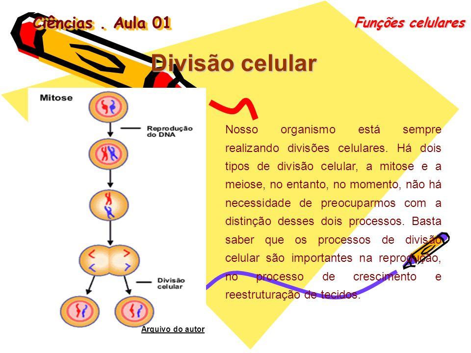 Ciências. Aula 01 Funções celulares Divisão celular Nosso organismo está sempre realizando divisões celulares. Há dois tipos de divisão celular, a mit