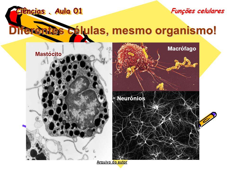 Ciências. Aula 01 Funções celulares Diferentes células, mesmo organismo! Neurônios Macrófago Mastócito Arquivo do autor