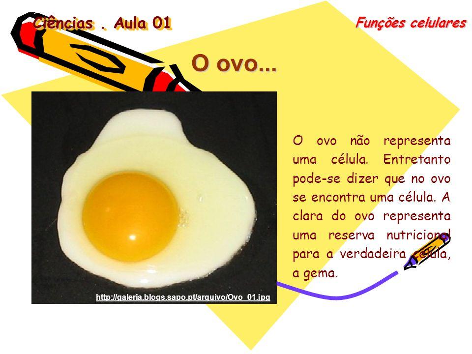 Ciências. Aula 01 Funções celulares O ovo... O ovo não representa uma célula. Entretanto pode-se dizer que no ovo se encontra uma célula. A clara do o