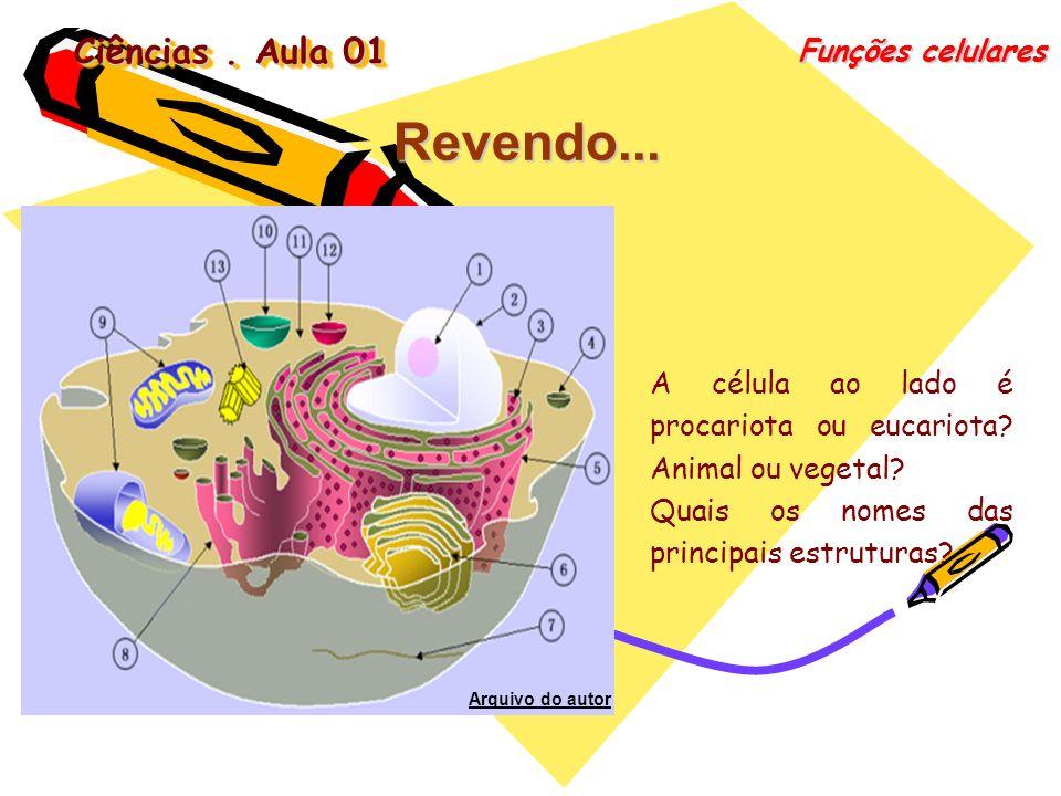 Ciências. Aula 01 Funções celulares Revendo... A célula ao lado é procariota ou eucariota? Animal ou vegetal? Quais os nomes das principais estruturas