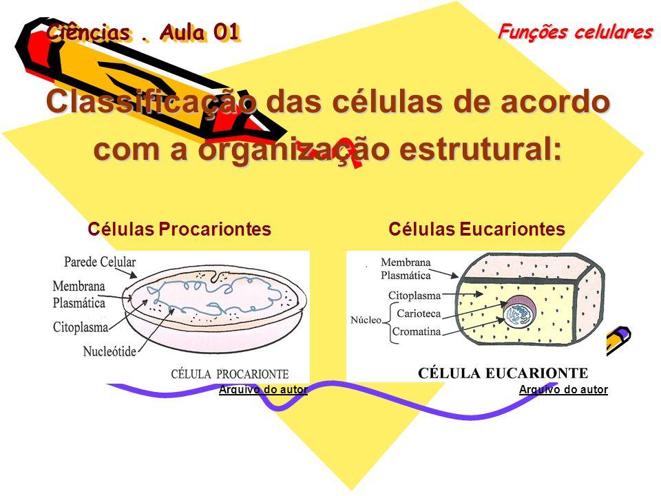 Ciências. Aula 01 Funções celulares Classificação das células de acordo com a organização estrutural: Células EucariontesCélulas Procariontes Arquivo