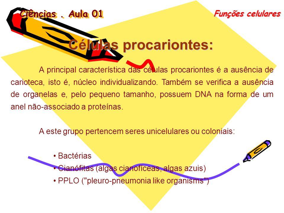 Ciências. Aula 01 Funções celulares Células procariontes: A principal característica das células procariontes é a ausência de carioteca, isto é, núcle