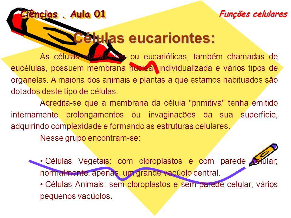 Ciências. Aula 01 Funções celulares As células eucariontes ou eucarióticas, também chamadas de eucélulas, possuem membrana nuclear individualizada e v