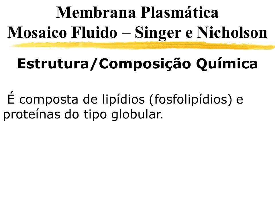 Estrutura/Composição Química É composta de lipídios (fosfolipídios) e proteínas do tipo globular. Membrana Plasmática Mosaico Fluido – Singer e Nichol