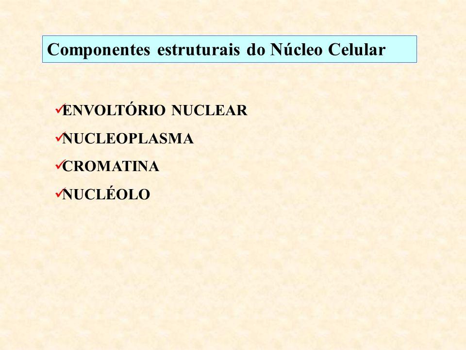 Componentes estruturais do Núcleo Celular ENVOLTÓRIO NUCLEAR NUCLEOPLASMA CROMATINA NUCLÉOLO