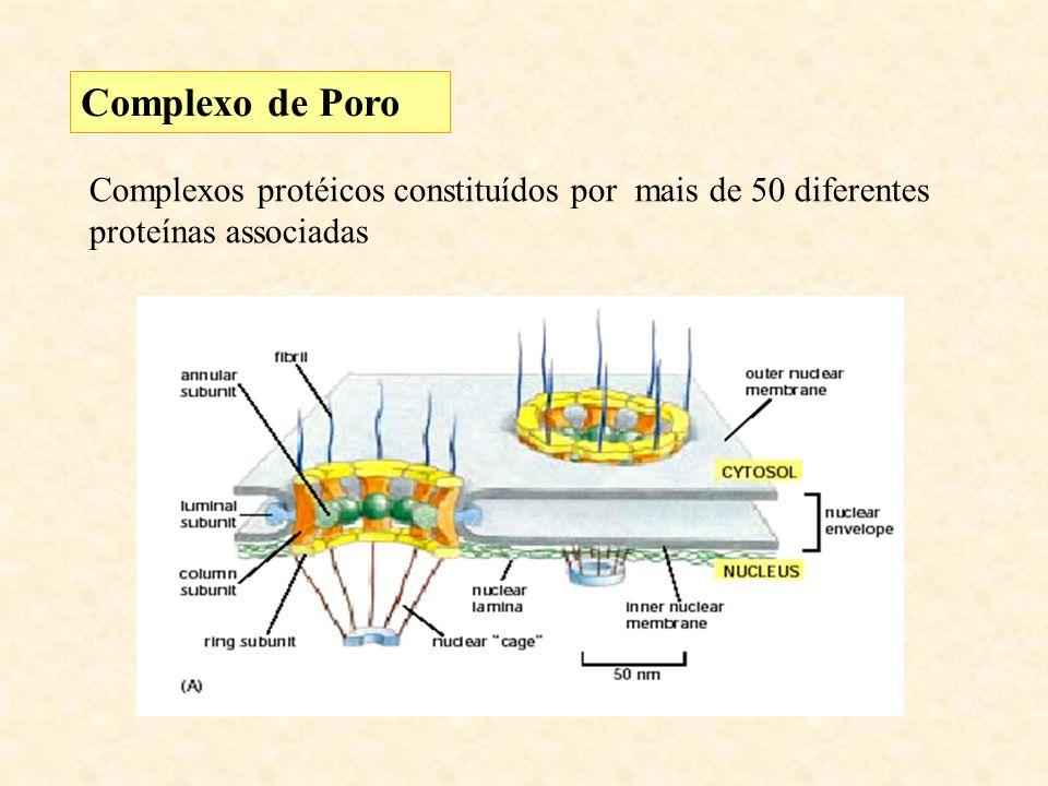 Complexo de Poro Complexos protéicos constituídos por mais de 50 diferentes proteínas associadas