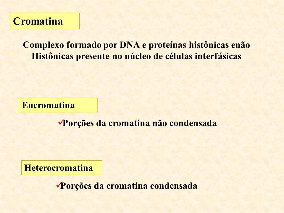 Cromatina Complexo formado por DNA e proteínas histônicas enão Histônicas presente no núcleo de células interfásicas Eucromatina Porções da cromatina não condensada Heterocromatina Porções da cromatina condensada