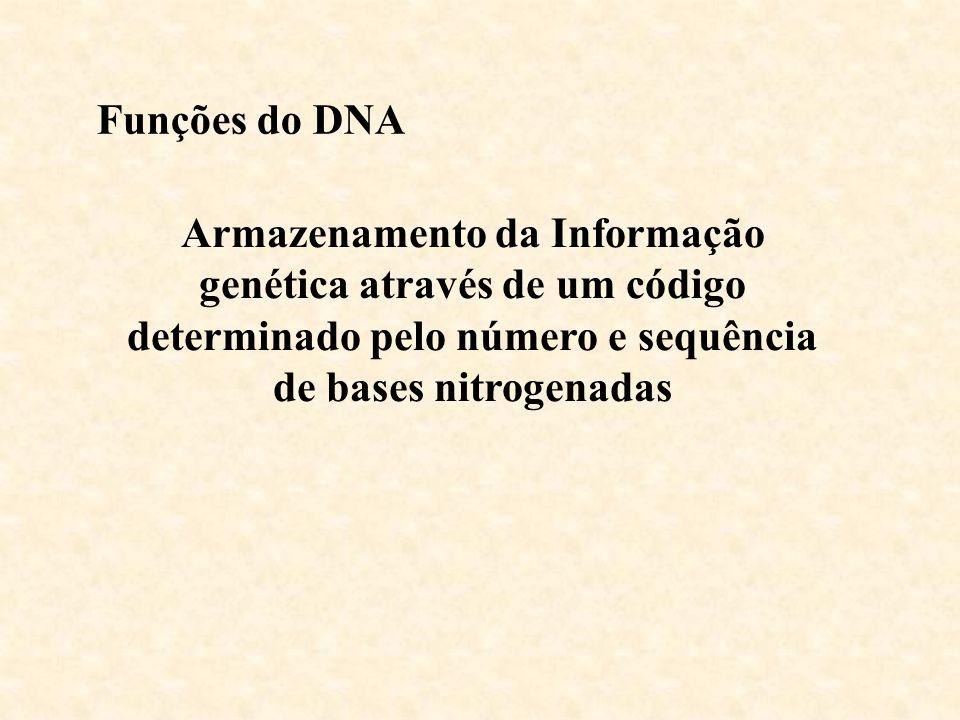 Funções do DNA Armazenamento da Informação genética através de um código determinado pelo número e sequência de bases nitrogenadas