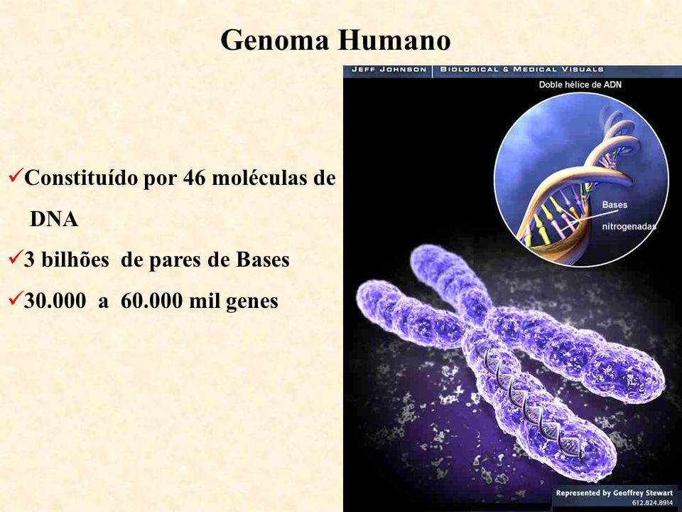 Genoma Humano Constituído por 46 moléculas de DNA 3 bilhões de pares de Bases 30.000 a 60.000 mil genes
