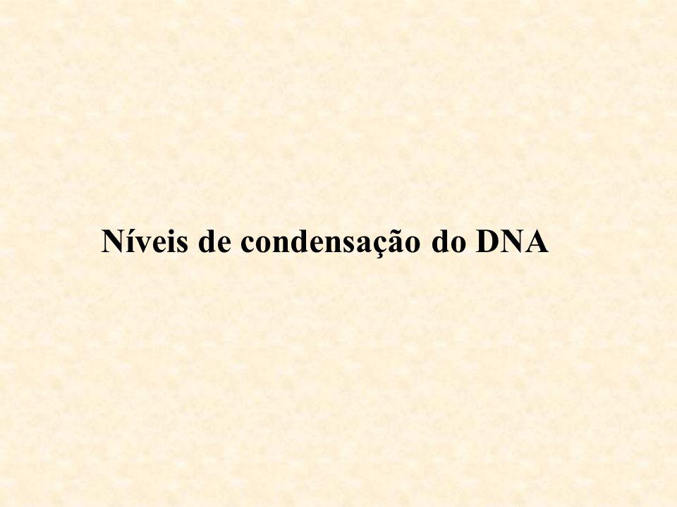 Níveis de condensação do DNA