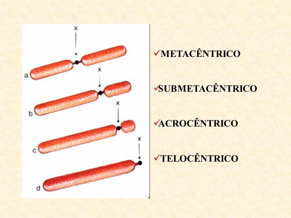 METACÊNTRICO SUBMETACÊNTRICO ACROCÊNTRICO TELOCÊNTRICO