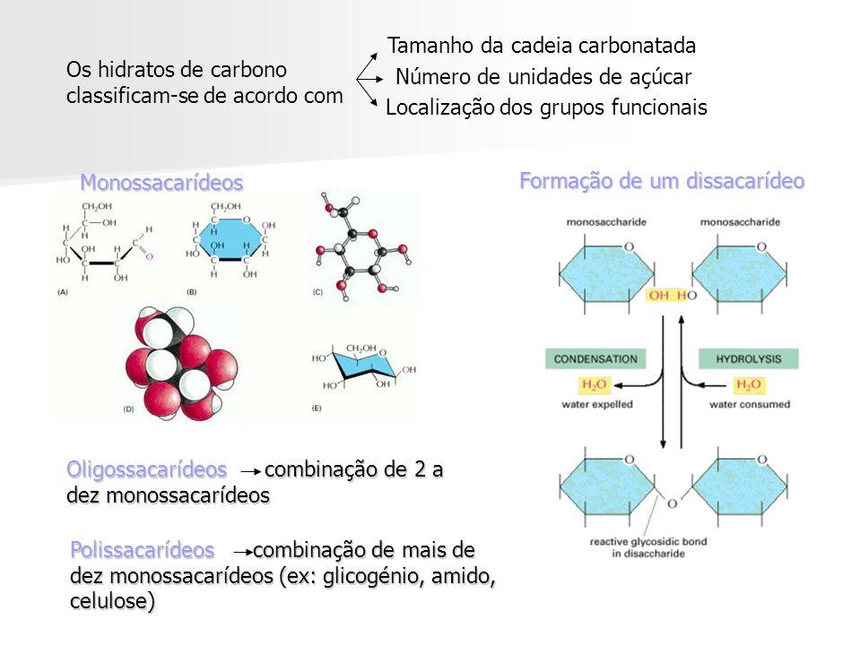 Os hidratos de carbono classificam-se de acordo com Tamanho da cadeia carbonatada Número de unidades de açúcar Localização dos grupos funcionais Formação de um dissacarídeo Formação de um dissacarídeo Monossacarídeos Oligossacarídeos combinação de 2 a dez monossacarídeos Polissacarídeos combinação de mais de dez monossacarídeos (ex: glicogénio, amido, celulose)