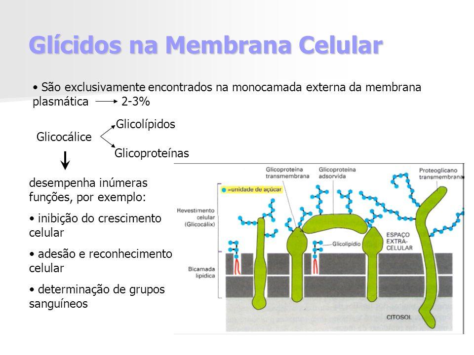 Glícidos na Membrana Celular Glicocálice Glicolípidos Glicoproteínas São exclusivamente encontrados na monocamada externa da membrana plasmática 2-3% desempenha inúmeras funções, por exemplo: inibição do crescimento celular adesão e reconhecimento celular determinação de grupos sanguíneos