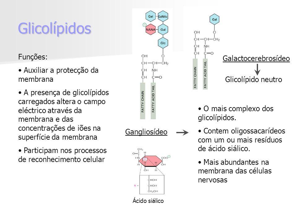 Glicolípidos Gangliosídeo O mais complexo dos glicolípidos.