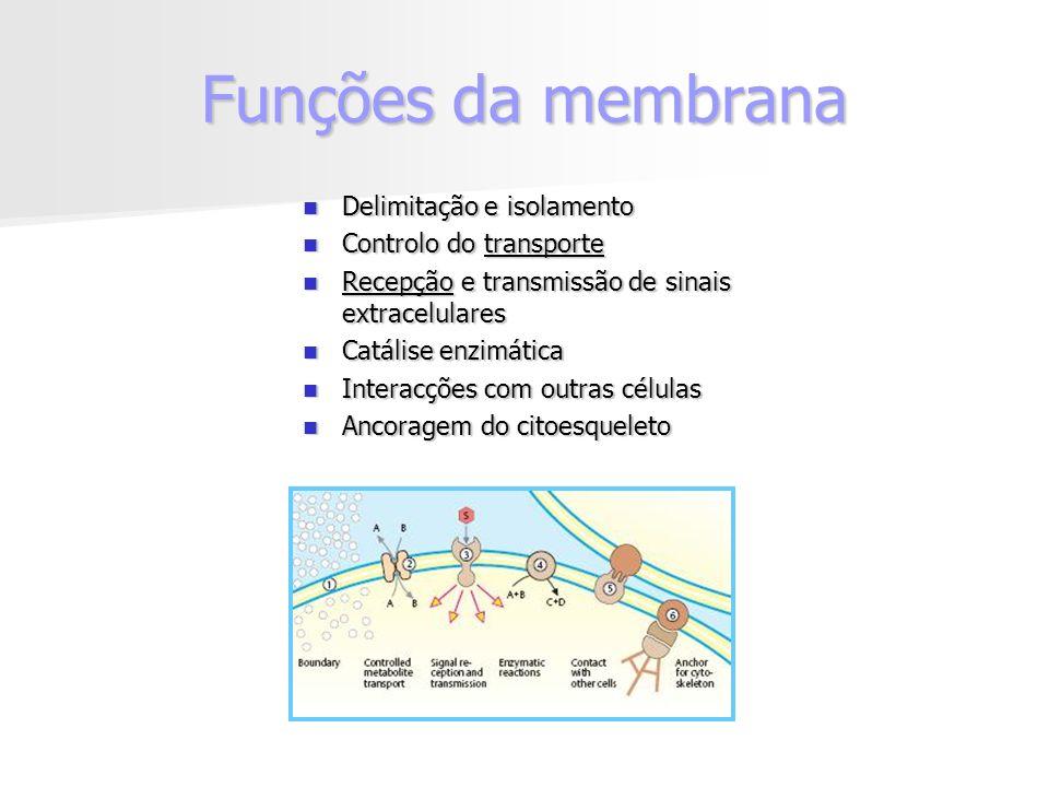 Funções da membrana Delimitação e isolamento Delimitação e isolamento Controlo do transporte Controlo do transporte Recepção e transmissão de sinais extracelulares Recepção e transmissão de sinais extracelulares Catálise enzimática Catálise enzimática Interacções com outras células Interacções com outras células Ancoragem do citoesqueleto Ancoragem do citoesqueleto