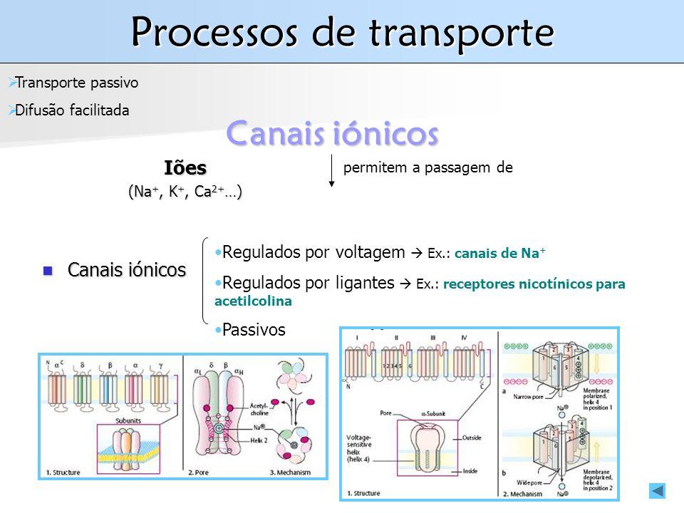 Processos de transporte Iões (Na +, K +, Ca 2+ …) Canais iónicos Transporte passivo Difusão facilitada permitem a passagem de Canais iónicos Canais iónicos Regulados por voltagem Ex.: canais de Na + Regulados por ligantes Ex.: receptores nicotínicos para acetilcolina Passivos